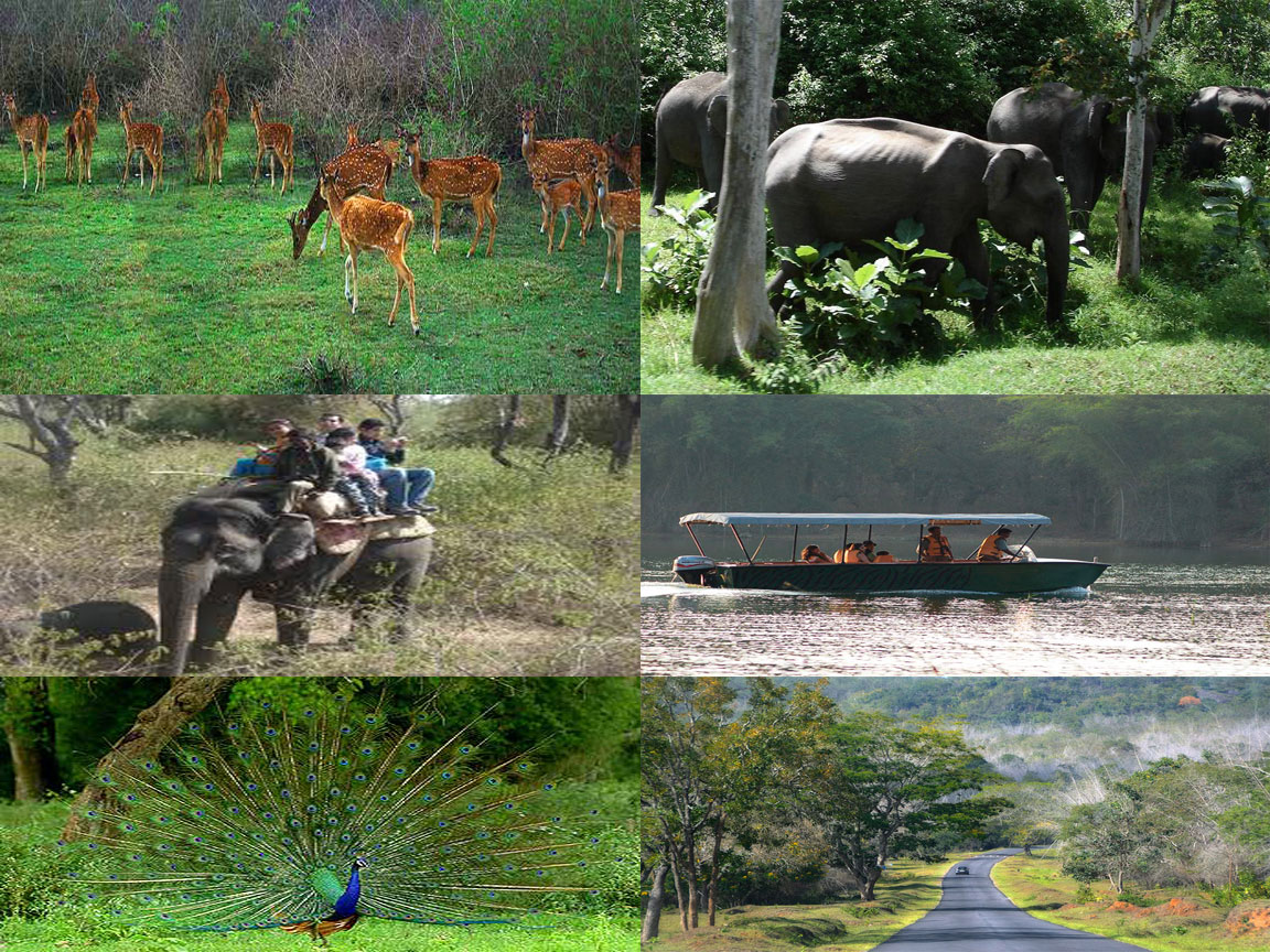 bandipur animals