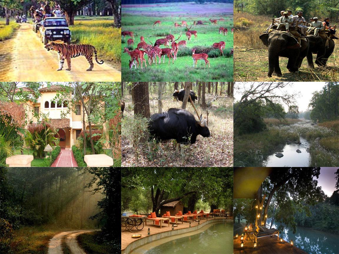 Kanha Kisli National Park Tour Packages
